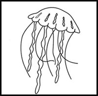 how to draw a jellyfish step by step how to draw cartoon jellyfish realistic jellyfish step by to a how draw step jellyfish