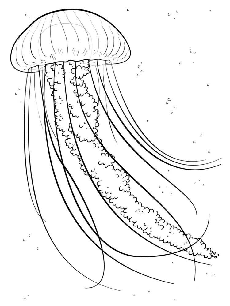 how to draw a jellyfish step by step how to draw jellyfish step by step arcmelcom a draw step to how jellyfish by step