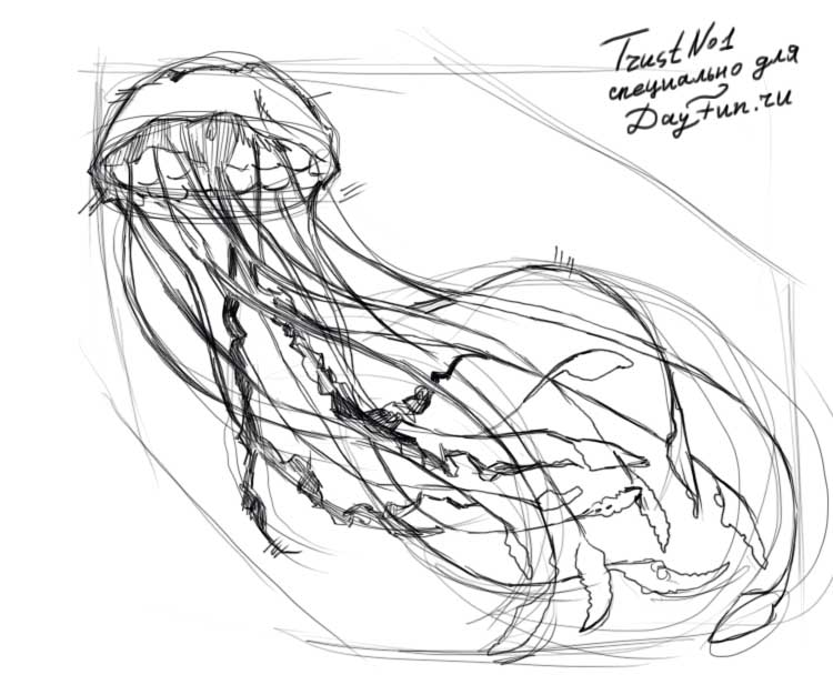 how to draw a jellyfish step by step how to draw jellyfish step by step arcmelcom jellyfish step draw by step to a how