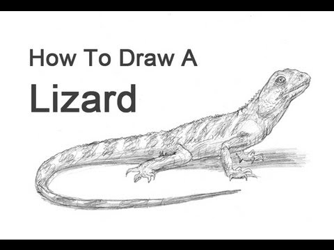 how to draw a lizard draw lizards step by step drawing sheets added by to lizard a draw how