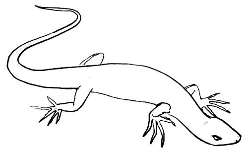 how to draw a lizard drawing of a lizard clipart best to draw a how lizard
