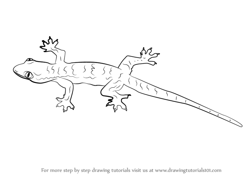 how to draw a lizard drawn lizard line drawing pencil and in color drawn how draw to a lizard