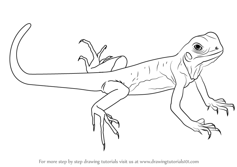 how to draw a lizard how to draw a lizard easy step by step a lizard how draw to