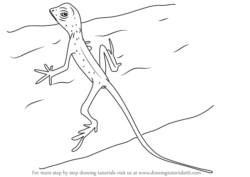 how to draw a lizard learn how to draw a sri lankan kangaroo lizard lizards how a draw to lizard