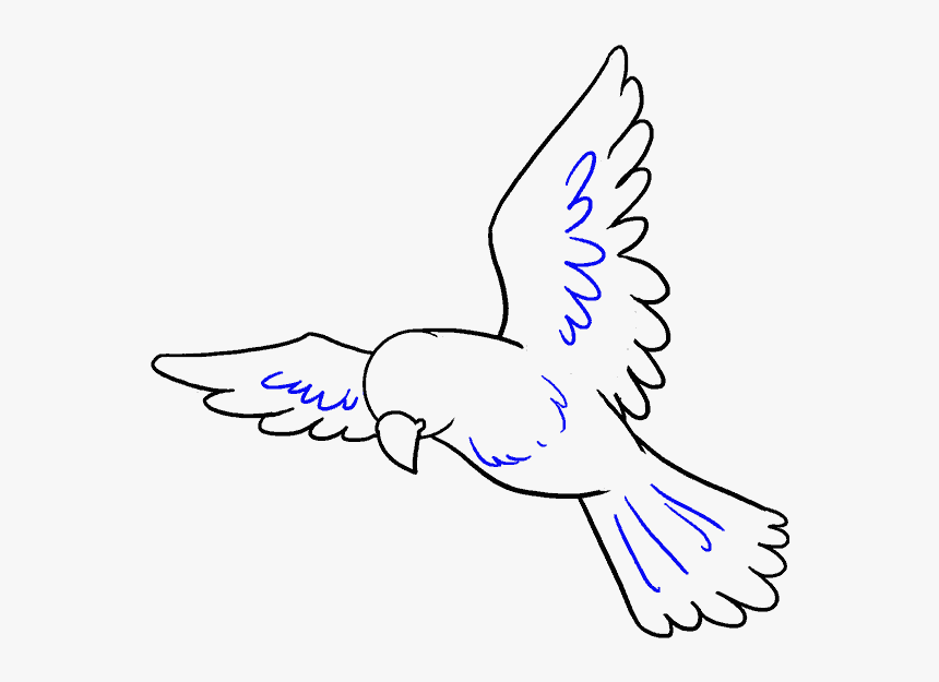 how to draw a pigeon step by step how to draw a bird easy step bird drawing easy hd png a step to how step draw by pigeon