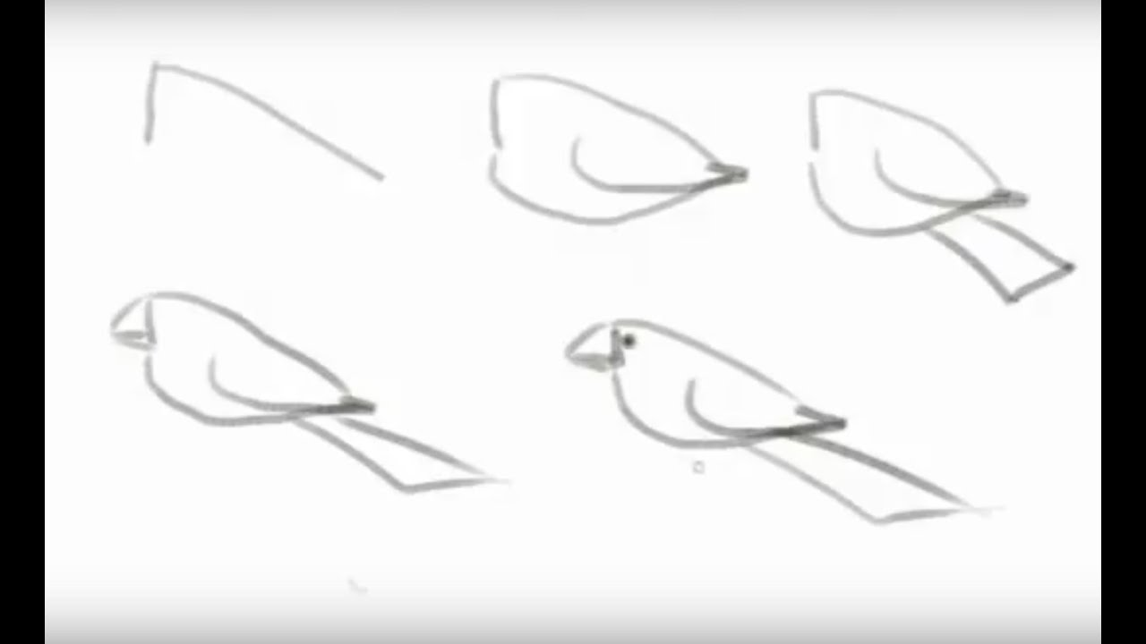 how to draw a pigeon step by step how to draw a bird easy steps for beginners youtube draw step pigeon a by step to how