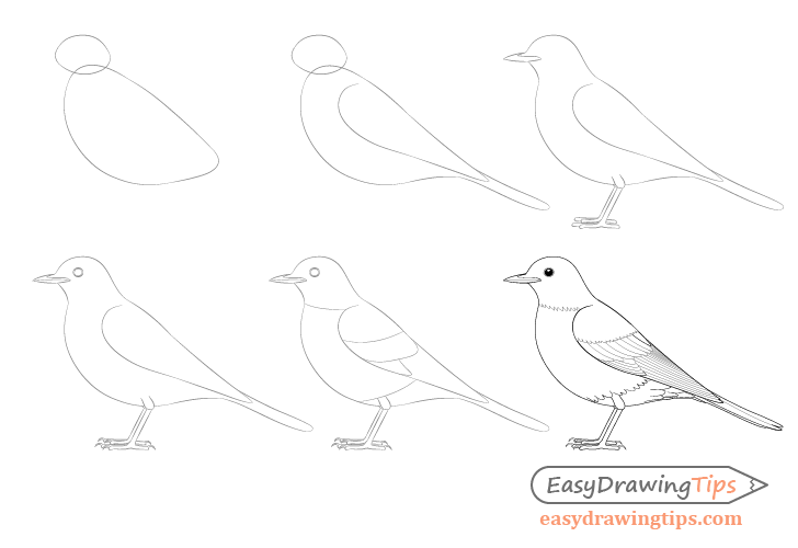 how to draw a pigeon step by step how to draw a pigeon really easy drawing tutorial step by step how to a draw pigeon
