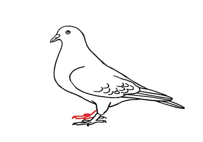 how to draw a pigeon step by step how to simple draw a pigeon step by step for kids cute a draw step how to step by pigeon