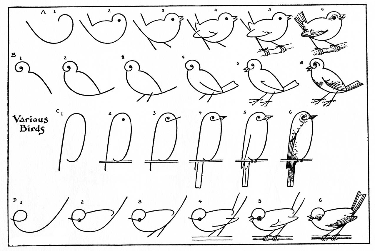 how to draw a pigeon step by step kids printable draw some birds 2 the graphics fairy to draw step a how step by pigeon