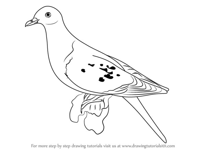 how to draw a pigeon step by step learn how to draw a passenger pigeon birds step by step step by how pigeon draw to a step