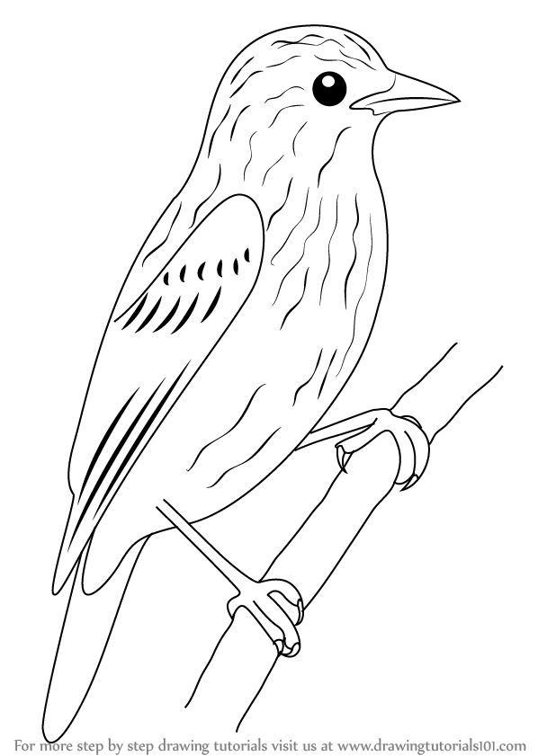 how to draw a pigeon step by step learn how to draw xenops birds step by step drawing pigeon a how to step by draw step