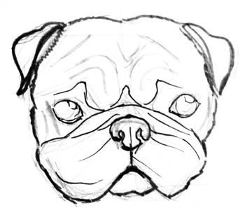how to draw a pug face 10 best for realistic pug line drawing the teddy theory pug face a to how draw