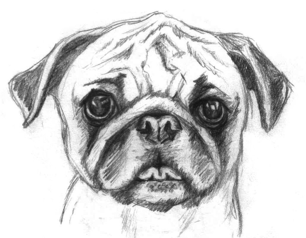 how to draw a pug face 70 pug drawings ideas in 2020 pug art pugs drawings to pug how face a draw