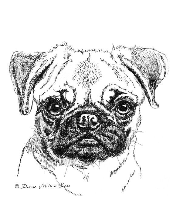 how to draw a pug face cute dog face drawing at paintingvalleycom explore face how a to pug draw