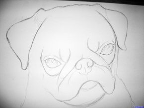 how to draw a pug face how to draw a pug cute very easy and separately his face a to face pug how draw