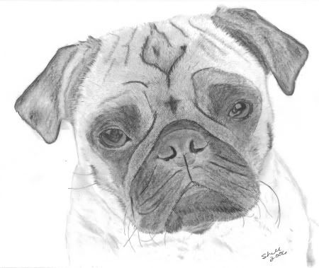 how to draw a pug face how to draw a pug face how to face pug draw a
