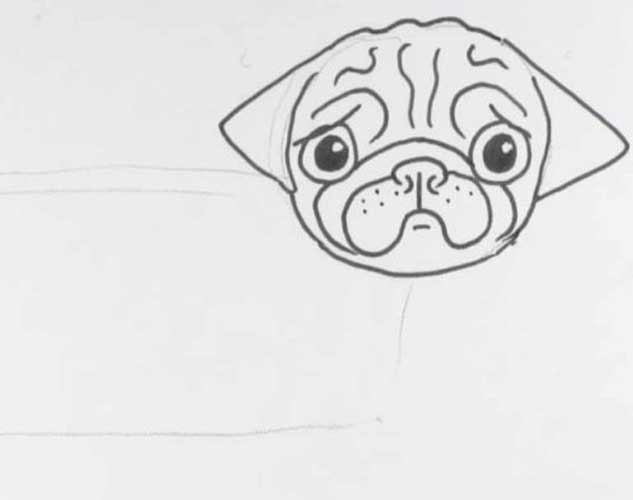 how to draw a pug face how to draw a pug head detail draw to how a face pug