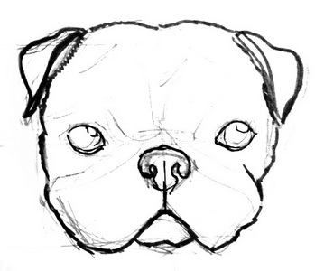 how to draw a pug face pin on inspiring art how face draw to a pug
