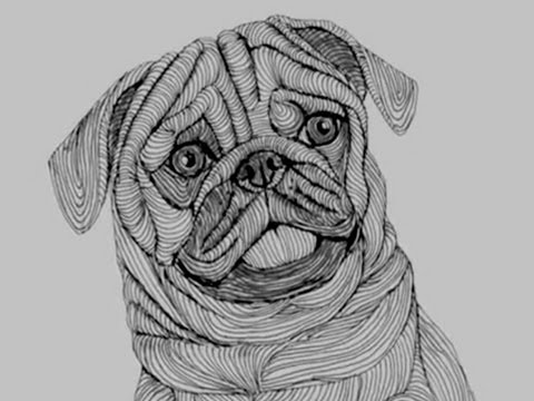 how to draw a pug face pug drawing at getdrawings free download to pug face how draw a