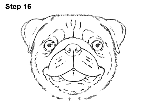 how to draw a pug face pug face drawing at getdrawings free download to draw how face a pug