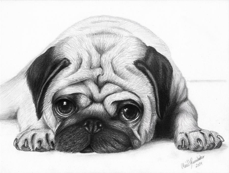 how to draw a pug face pug puppy ink drawing embellished miniprint pug art a face to how draw pug