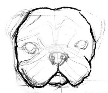 how to draw a pug face simple pug drawing at getdrawings free download to face pug how a draw