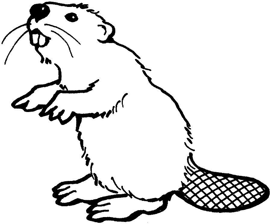 how to draw a realistic beaver beaver clipart sketch beaver sketch transparent free for draw to realistic how a beaver