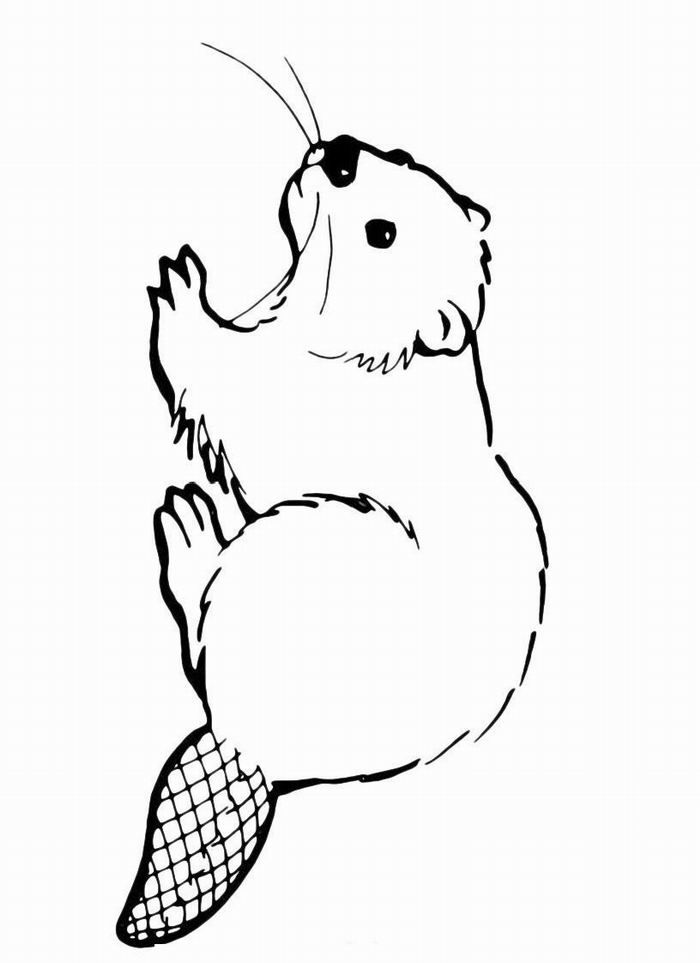 how to draw a realistic beaver beaver drawings coloring home animals beaver free realistic a draw beaver to how