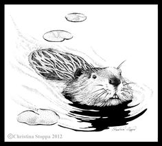 how to draw a realistic beaver beaver google search line drawings for literacy to beaver how a realistic draw