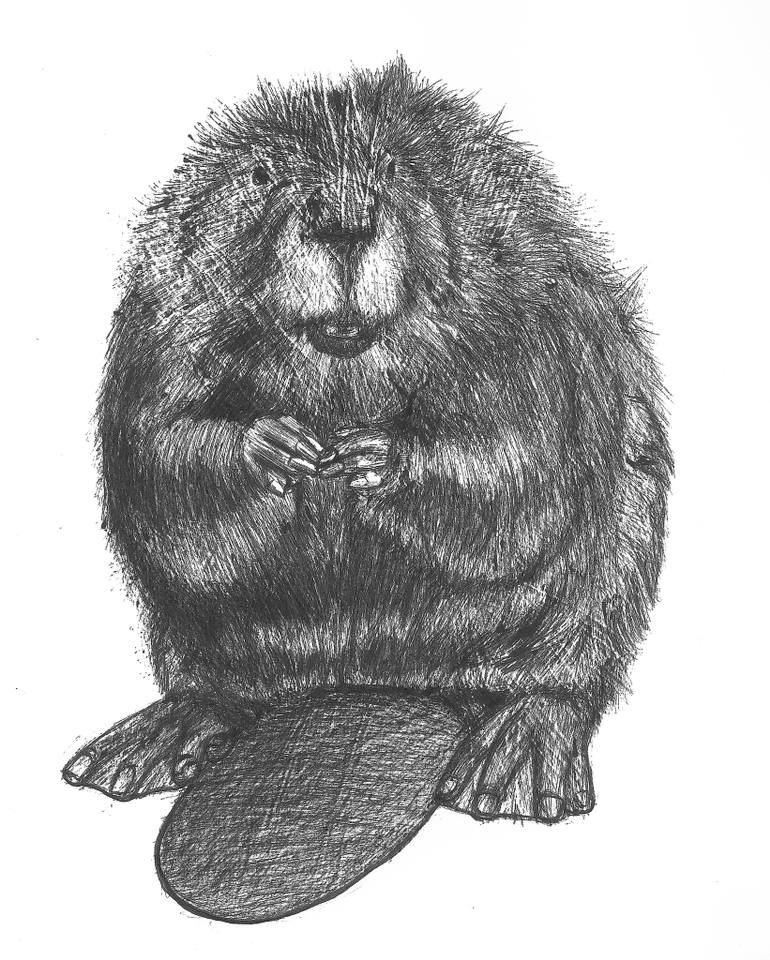 how to draw a realistic beaver beaver tail by qiu ling easy drawings in 2019 beaver how beaver to draw a realistic