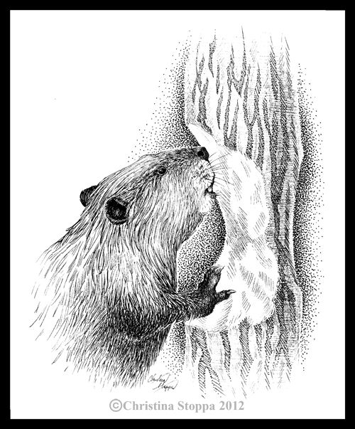 how to draw a realistic beaver drawing realistic birds step by step mockingbird drawing a draw realistic to how beaver