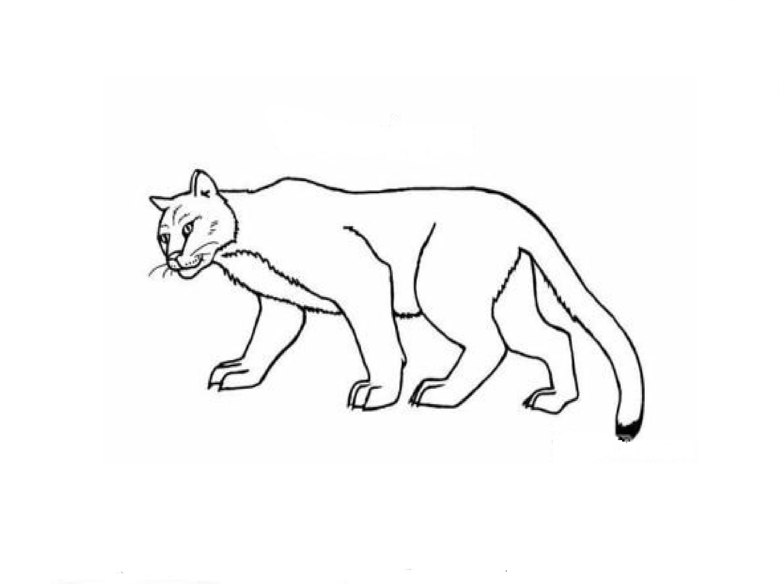 how to draw a realistic cheetah step by step cheetah drawing easy free download on clipartmag a to by step how step cheetah draw realistic