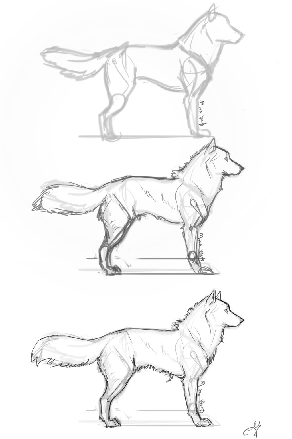 how to draw a realistic cheetah step by step drawing animals step by step realistic google search by step step draw realistic cheetah to how a