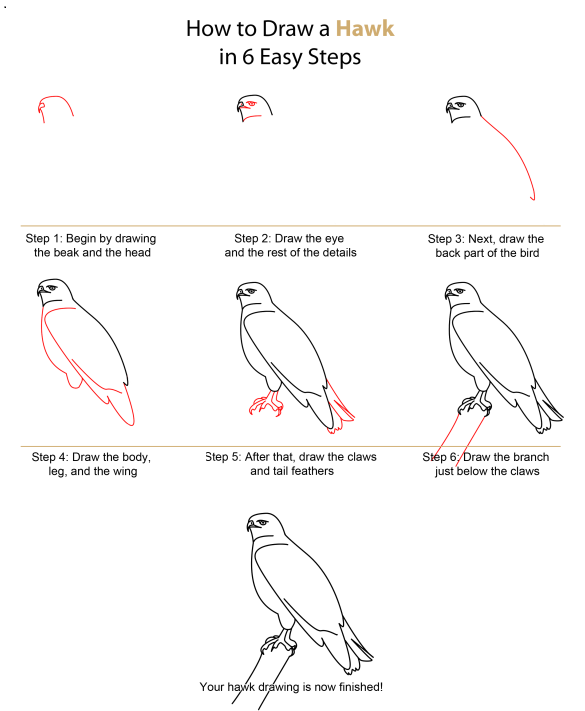 how to draw a realistic cheetah step by step drawing realistic birds step by step how to draw birds realistic step a draw step by cheetah to how