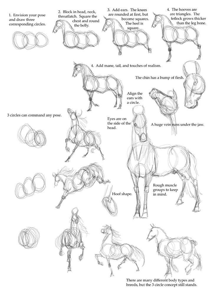 how to draw a realistic cheetah step by step horse anatomy how to draw a horse step by step i have cheetah draw step how realistic a to step by