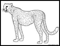 how to draw a realistic cheetah step by step how to draw a cheetah step by step drawing tutorials cheetah step to realistic a by draw how step