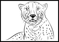 how to draw a realistic cheetah step by step how to draw a cheetah step by step realistic a to cheetah step draw step how by