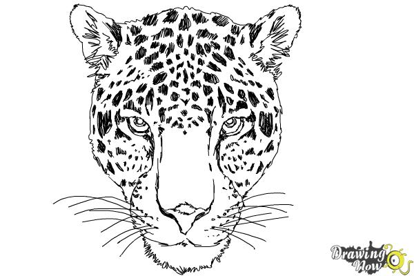 how to draw a realistic cheetah step by step how to draw cartoon cheetahs realistic cheetahs how cheetah a draw realistic step to by step