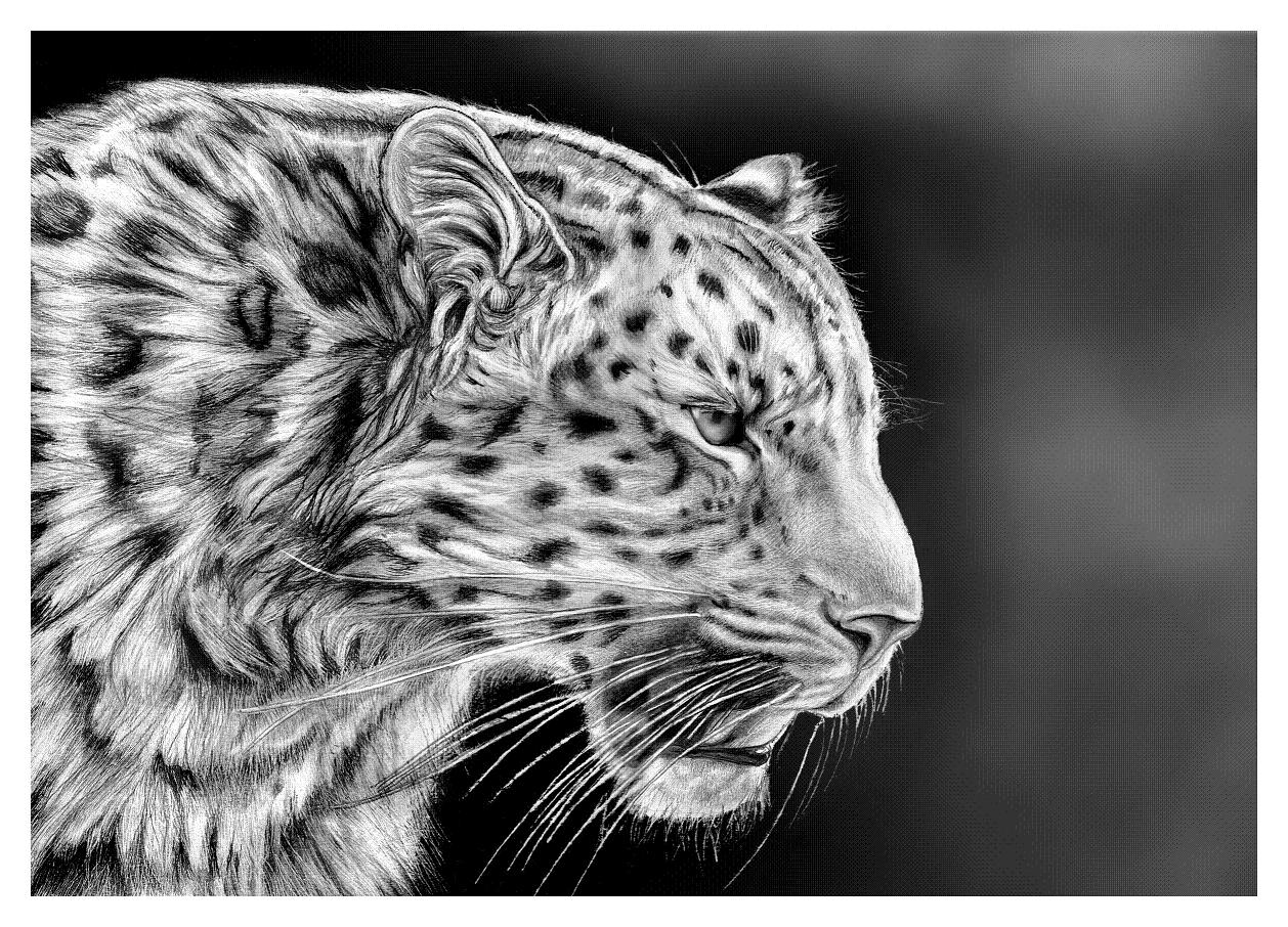 how to draw a realistic cheetah step by step how to draw realistic cheetah tiger step by step easy for how a step to step realistic by draw cheetah