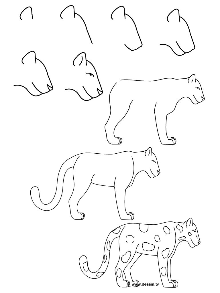 how to draw a realistic cheetah step by step how to draw simple learn how to draw a jaguar with realistic cheetah step step by to a draw how