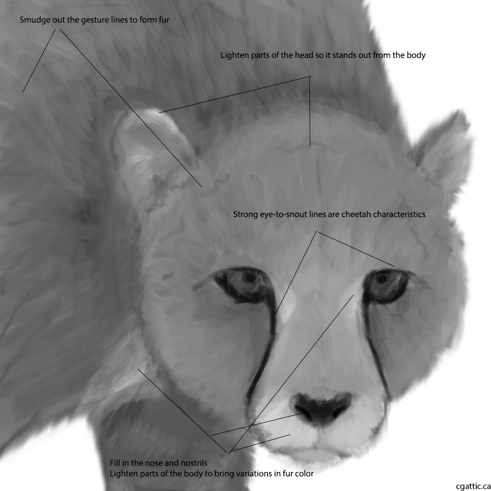 how to draw a realistic cheetah step by step realistic cheetah drawings in 4 steps with photoshop to a step realistic cheetah by draw how step