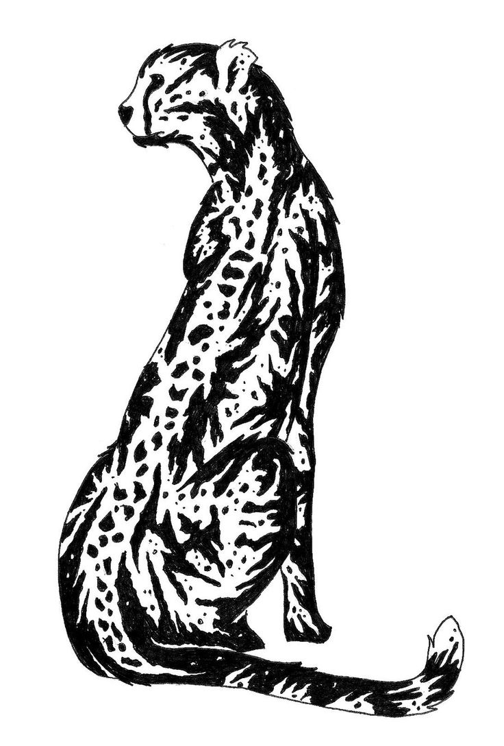 how to draw a realistic cheetah step by step simple cheetah drawing at getdrawings free download a realistic to step draw step by how cheetah