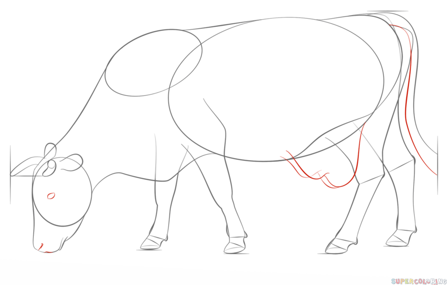 how to draw a realistic cow cow coloring pages printable cow drawing cow art realistic cow a how to draw