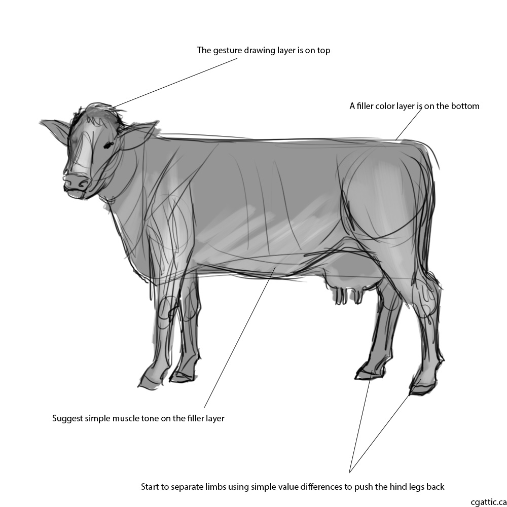 how to draw a realistic cow cow drawing pencil sketch colorful realistic art realistic cow draw how to a