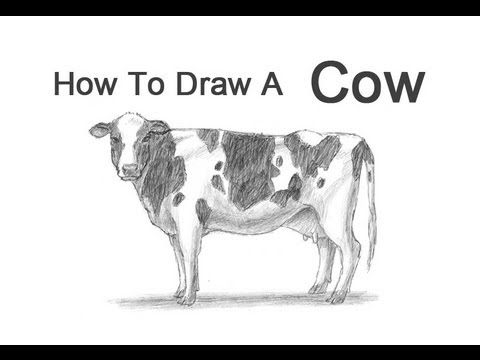 how to draw a realistic cow final product image cow drawing cow sketch cow to a how draw cow realistic