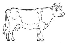 how to draw a realistic cow friesian heifer in 2020 highland cow art pencil cow a to realistic how draw