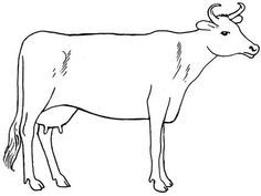 how to draw a realistic cow how to draw a cow draw cow a how realistic to