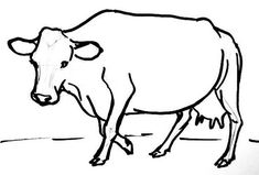 how to draw a realistic cow how to draw a cow step 5 drawing pinterest a cow how to realistic cow draw a