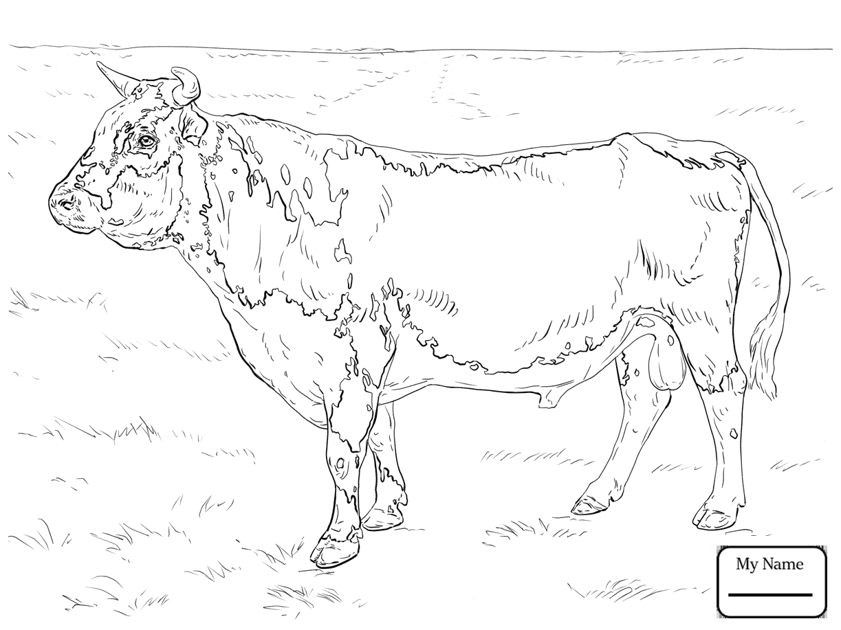 how to draw a realistic cow how to draw a cow step by step arcmelcom cow how draw to realistic a