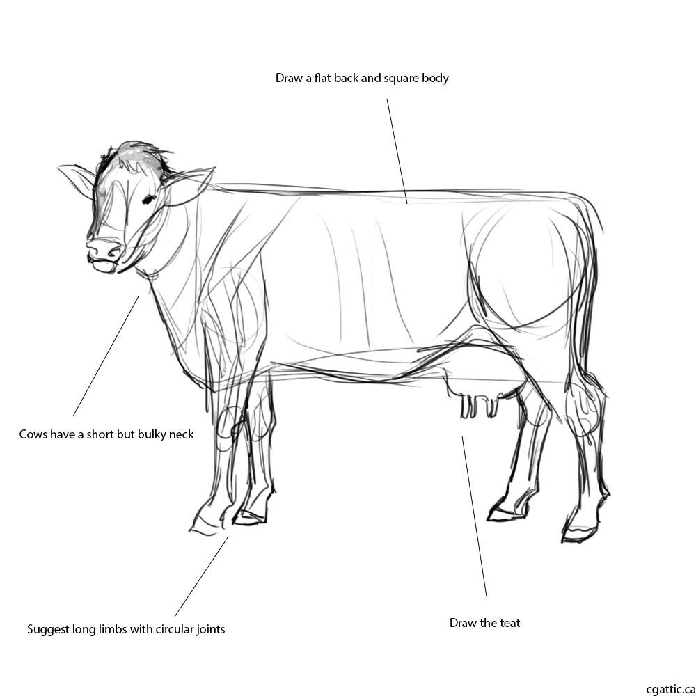 how to draw a realistic cow how to draw realistic cows how to draw a cow step by to draw cow how a realistic